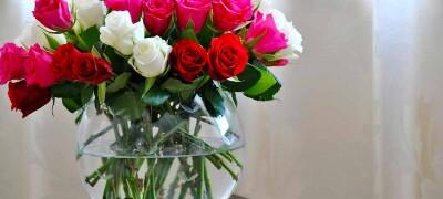 Как сохранить срезанные розы
