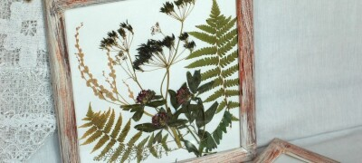 Правила сбора, сушки и оформления гербария