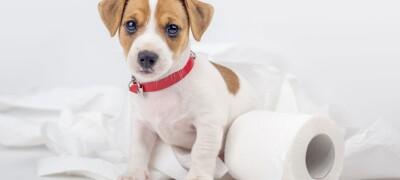Учим собаку справлять свои нужды в нужном месте