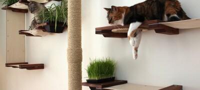Виды и изготовление настенных полок для кошек
