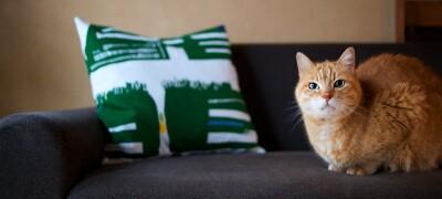 Чем является антивандальная ткань для диванов, особенности и разновидности