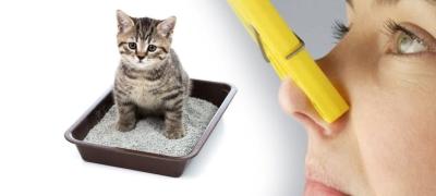 Чем убрать запах кошачьей мочи с дивана