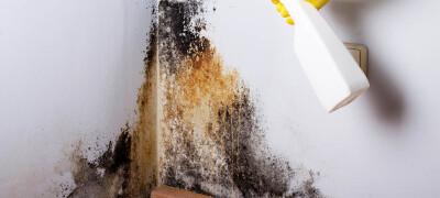 Способы избавления от плесени в подвале