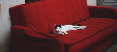 Способы избавления от запаха кошачьей мочи на диване