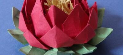 Как красиво сделать цветок лотос из салфеток