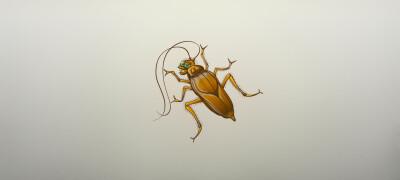 Способы и средства избавления от тараканов
