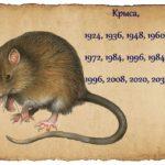 человек в год крысы