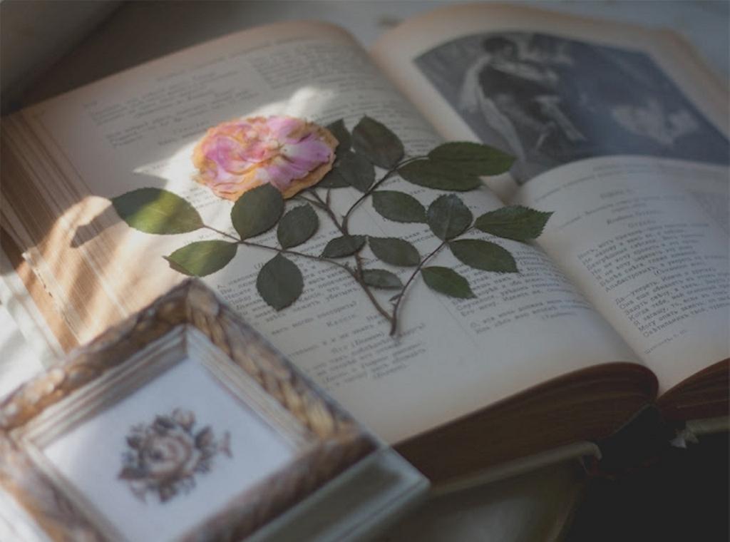 цветок в книге