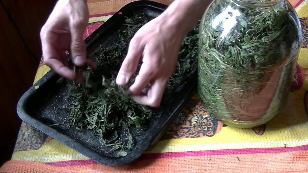 ферментация иван чая дома