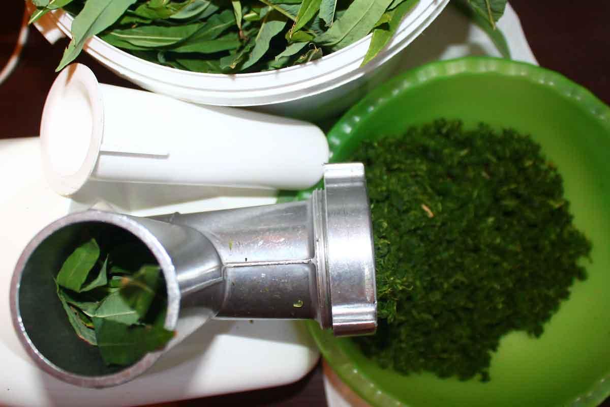 ферментация иван чая мясорубкой
