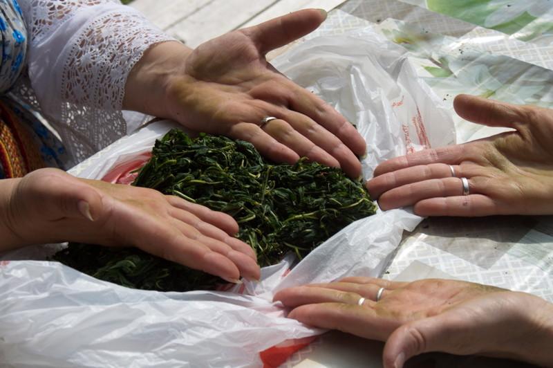 ферментация иван чая своими руками