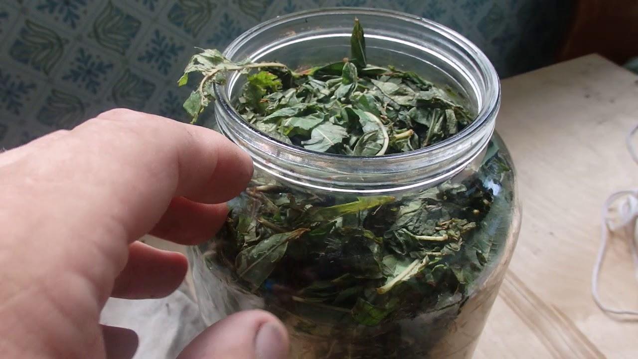 ферментация иван чая в банке