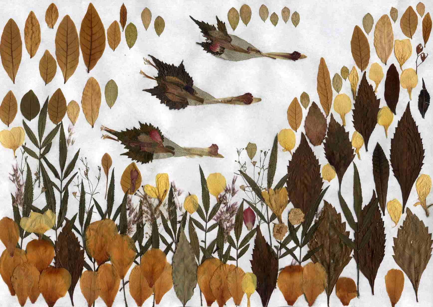 гербарий на листе