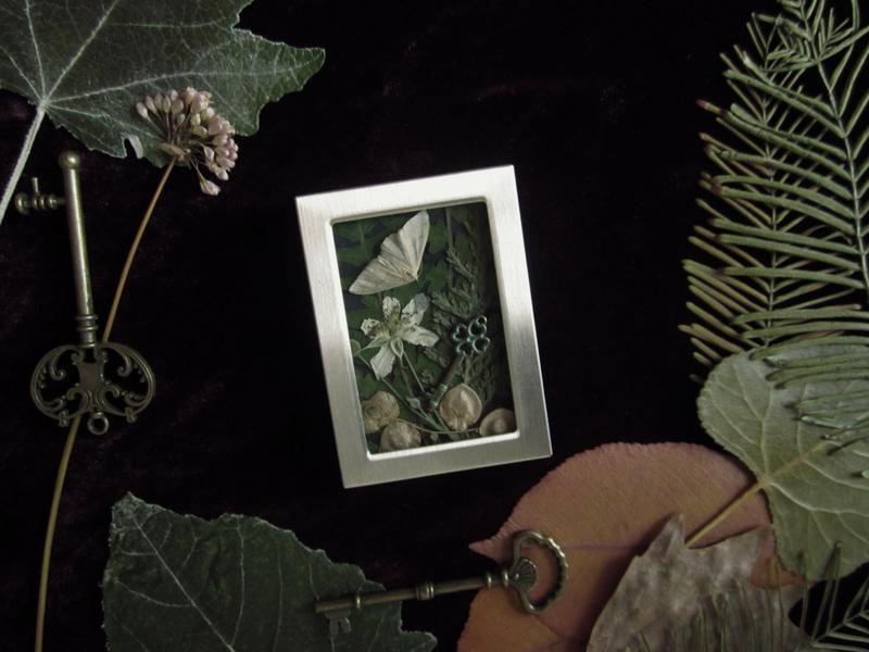 гербарий растения с бабочками