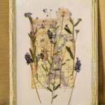 гербарий своими руками фото оформления