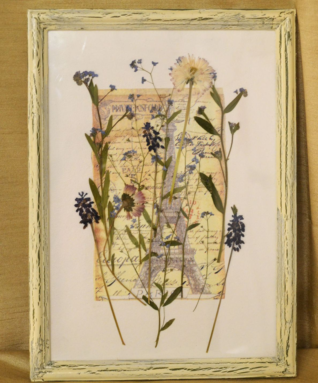 Картинки своими руками гербарий