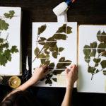 гербарий своими руками фото варианты
