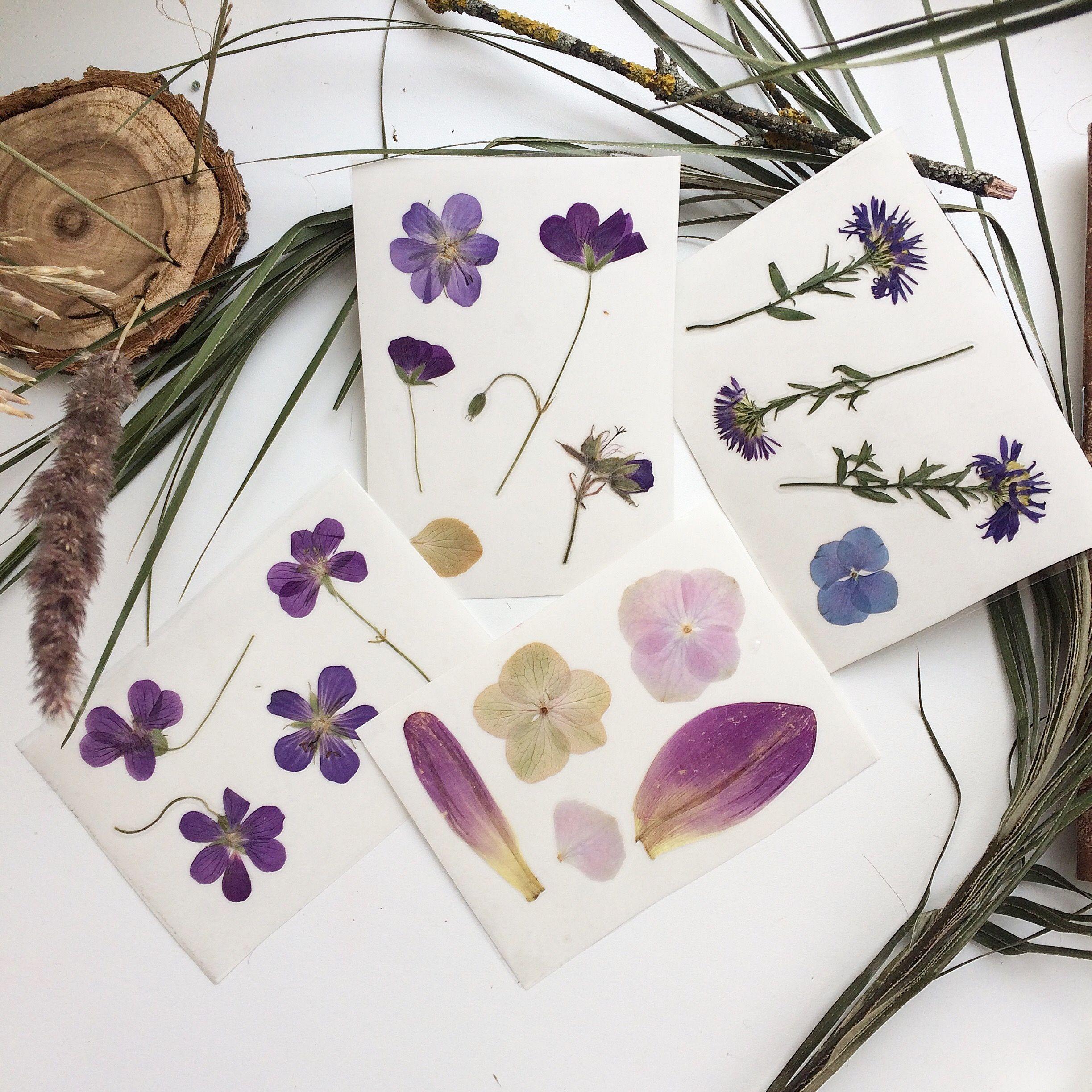 Красивые картинки гербария
