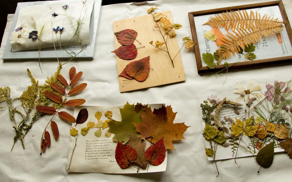 смену фото гербария из осенних листьев помощью сможете