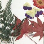 гербарий своими руками фото виды
