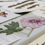 как сделать гербарий фото идеи
