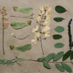 как сделать гербарий идеи