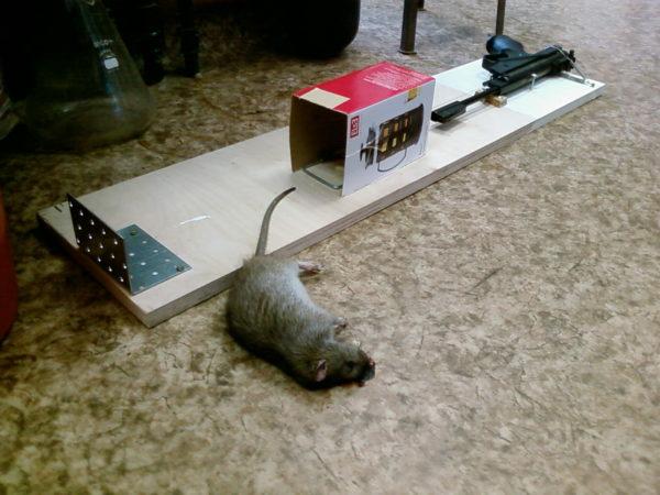Электронные или электрические ловушки призваны уничтожать грызунов.