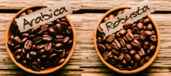 Однако зерна для напитка дают только два из них: робуста и арабика.