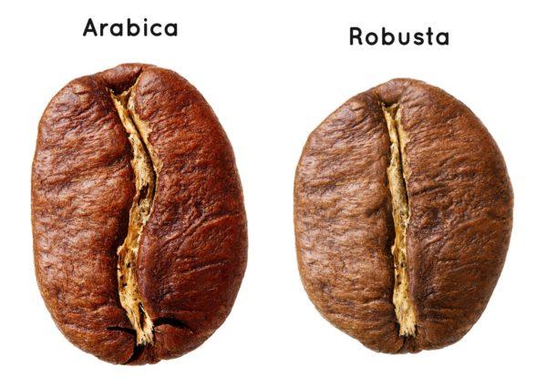 Арабика имеет вытянутую форму зерна, а робуста – круглую.