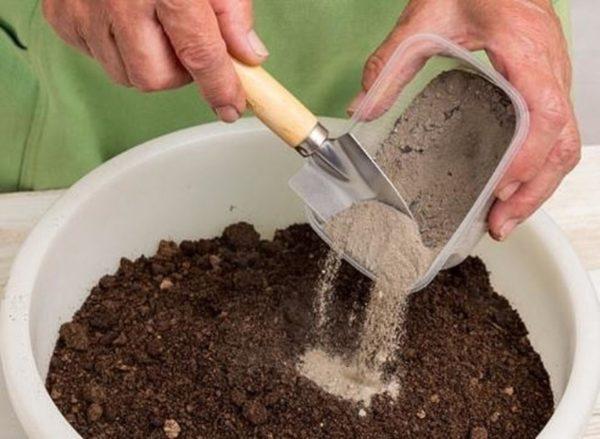 Для укоренения самым подходящим станет субстрат из торфяной земли, песка и перегнойной земли, взятых в равных пропорциях.