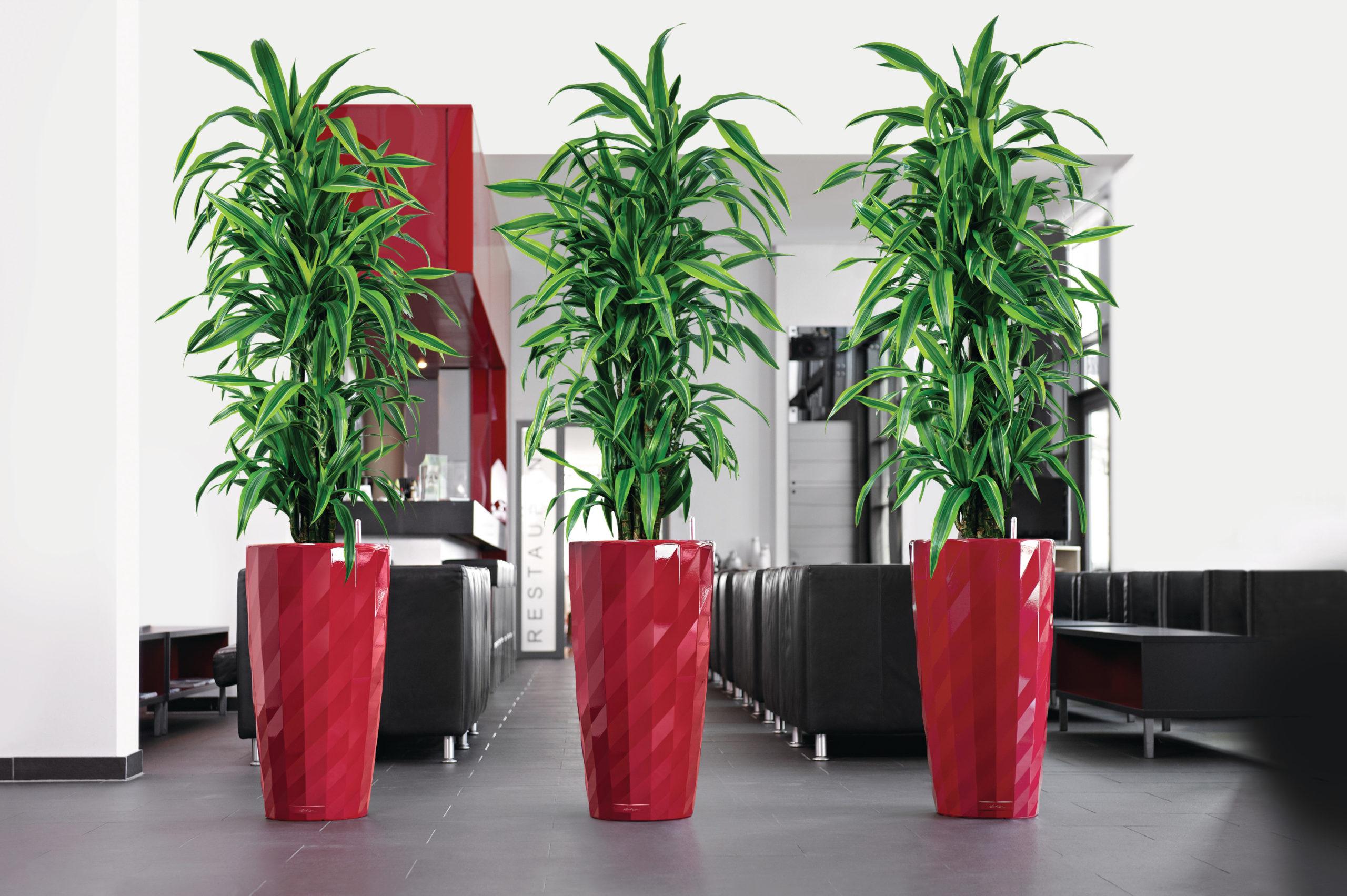 Большие офисные растения фото и названия