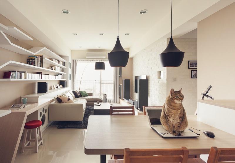 кот в комнате