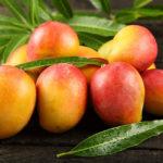 манго фото плода