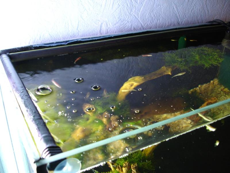 мошки на аквариуме