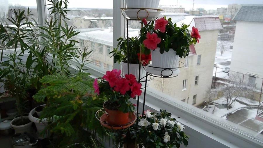 мошки на балконе с цветами