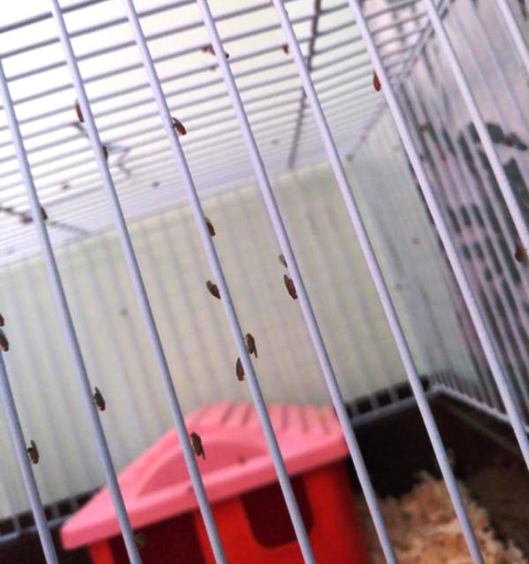 мошки на клетке с хомяками