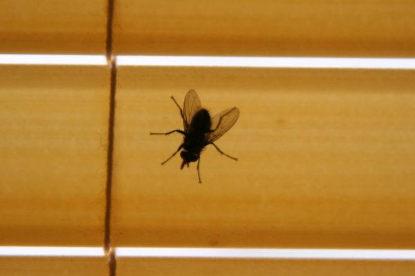 В период сильных заморозков насекомые стараются найти кров, чтобы суметь пережить непогодицу