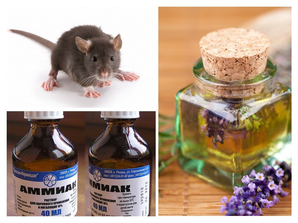 народные методы от запаха мышей