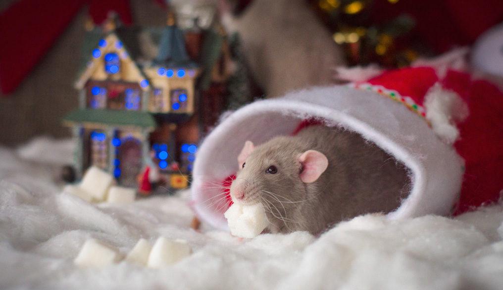 новогодняя мышка