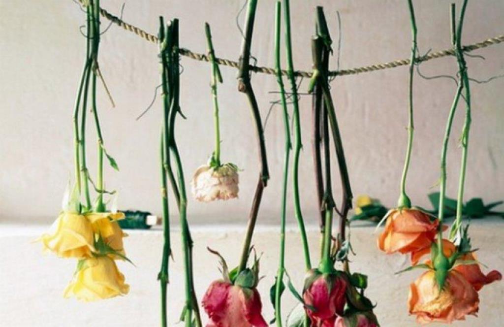 розы для гербария