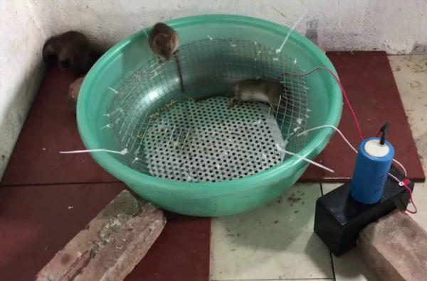 Так, эффективность в случае большого количества мышей покажу только те изделия, которые могут одновременно поймать много зверьков