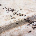 тропинка муравьёв