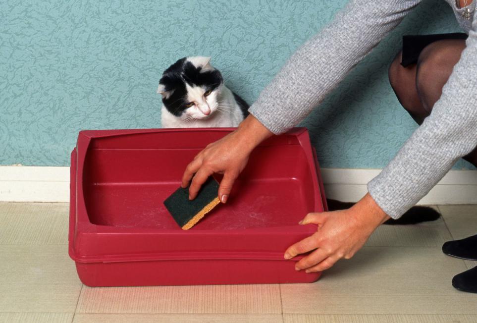 чистка кошачьего лотка