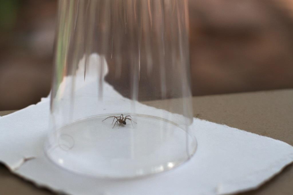 как поймать паука стаканом