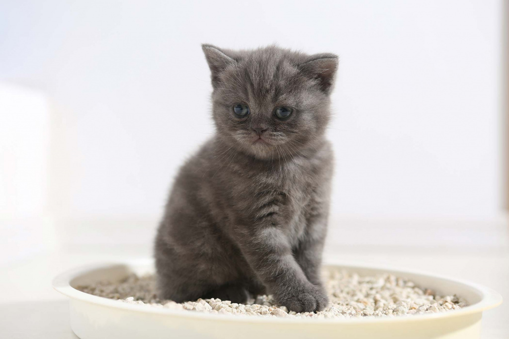 как приучить к лотку котенка