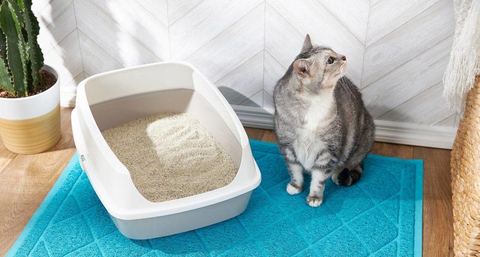 приучаем взрослого кота к лотку