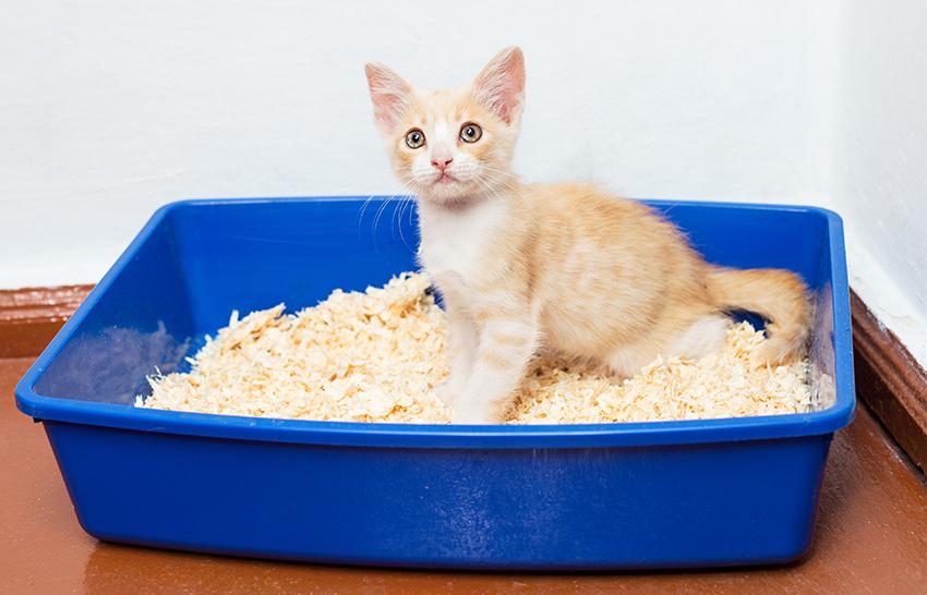 как приучить котенка к лотку без наполнителя