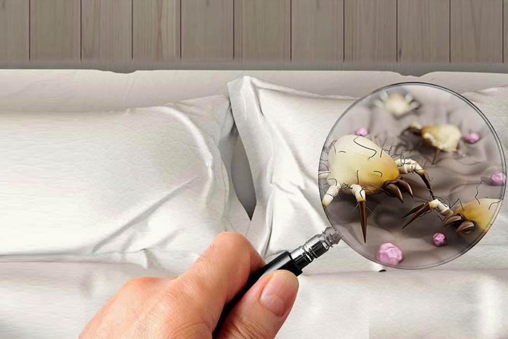клещи в постели фото