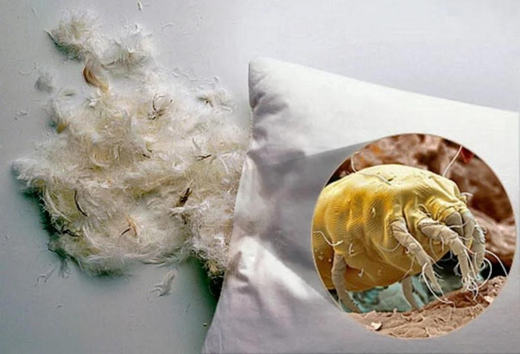 клещи в постели и подушках