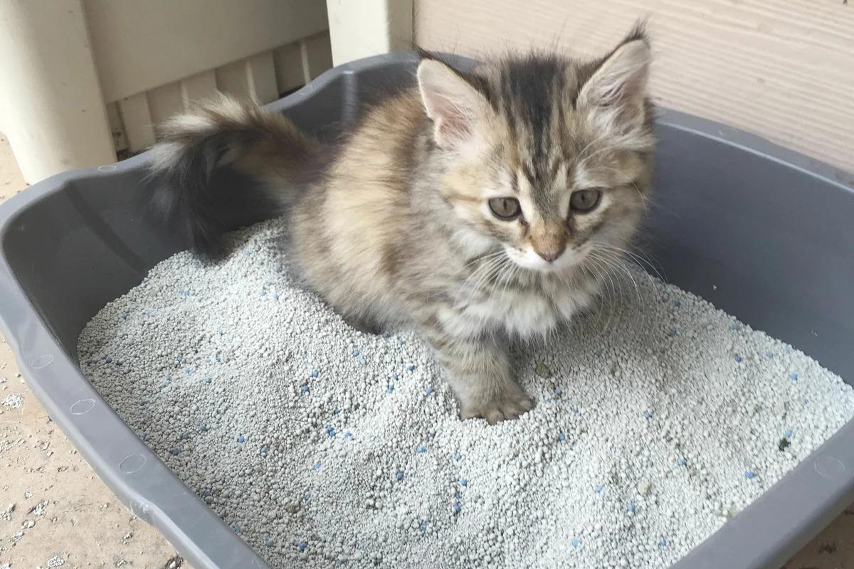 котенок в лотке фото